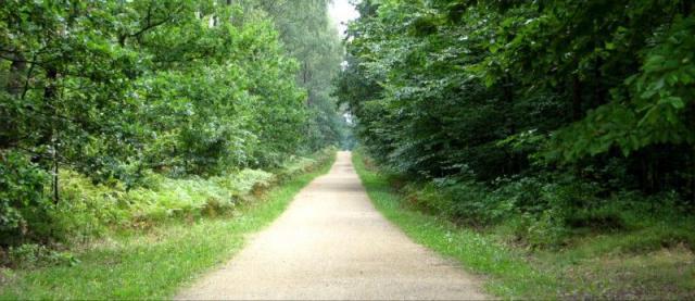 Droga przez Puszczę, autor: vanhelsing