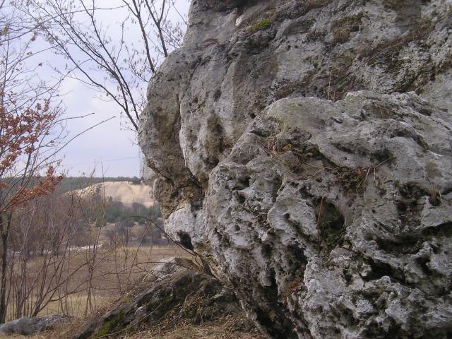 Z widokiem na Pustynię Siedlecką, autor: yacek