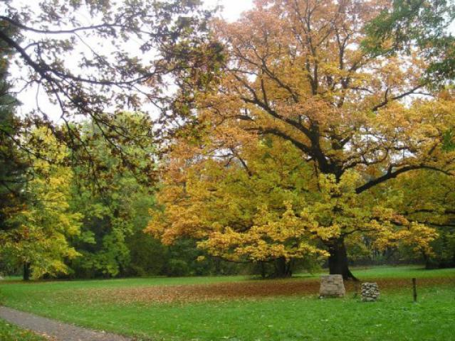 Park przypałacowy w Koszęcinie, autor: yacek