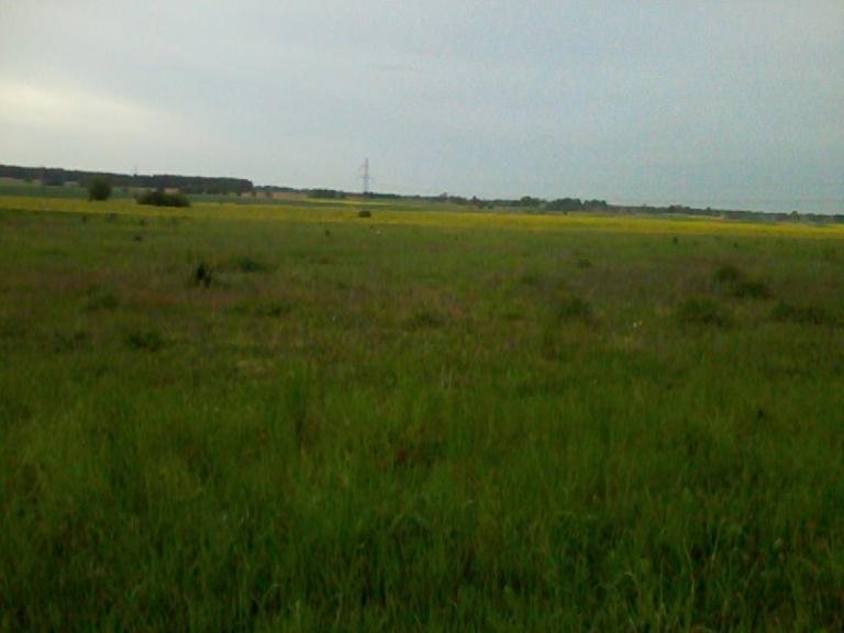 Bociek w trawie , autor: Jacuh30
