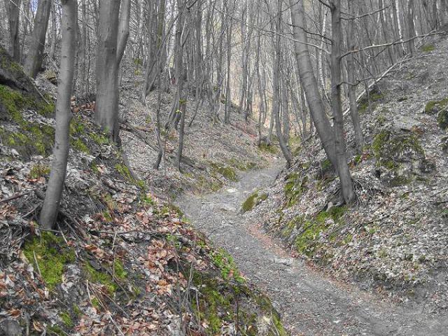 Jeden z najpiękniejszych na Jurze północnej  Wąwóz Międzygórze, autor: yacek