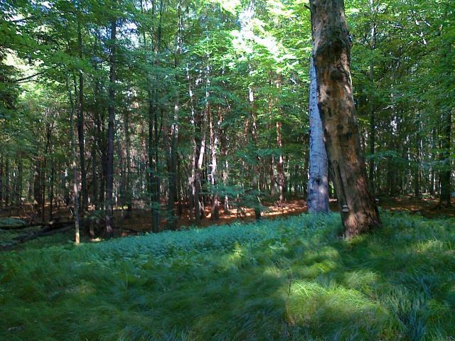 las w Murckach - MojRower.pl