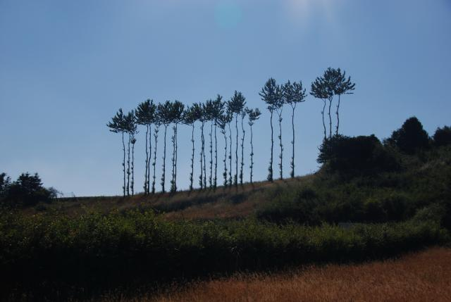 drzewa, autor: rafal_gd