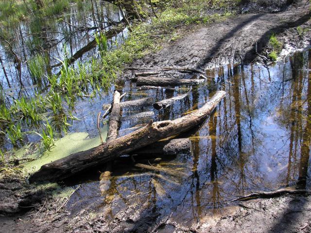 Wczesną wiosną przprawa przez bagna jest utrudniona a w deszczowe dni może być niemożliwa, dlatego warto zapytać mijanych rowerzystów o stan trasy. - MojRower.pl