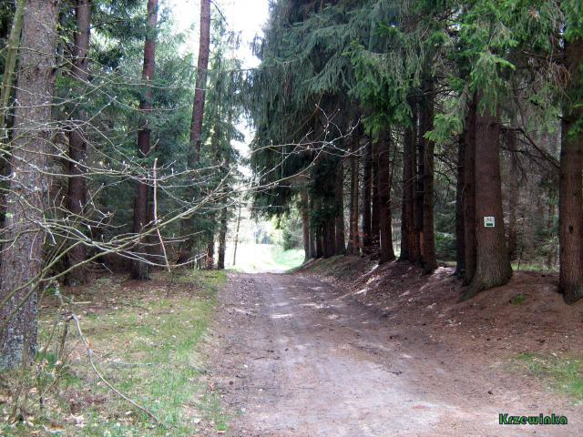 Zielonym szlakiem hobbitów - MojRower.pl