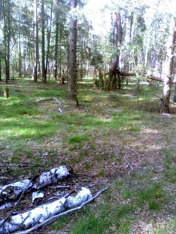 Krajobraz w tych lasach jest bardzo zróżnicowany. Co kilka kilometrów zmienia się teren i roślinność., autor: kokopiko