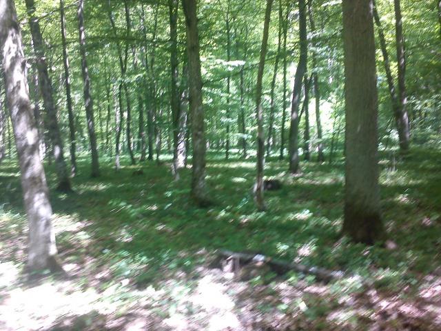 widok na las podczas jazdy trasą