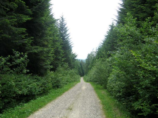 podjazd  lasem do Dylągowej - MojRower.pl
