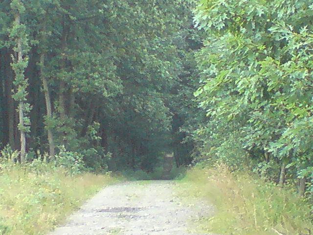 kierunek Żory - MojRower.pl