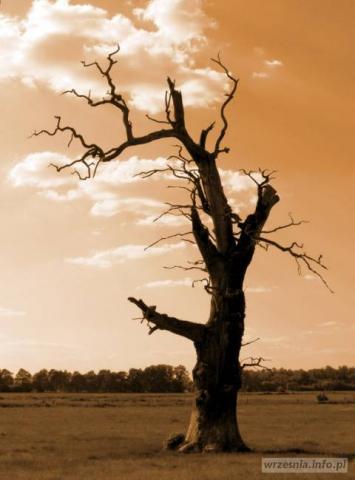 Piękny widok na uschnięte drzewa w Paruszewie, autor: neverest