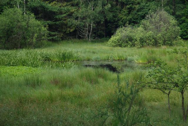 Mokradła w Trójmiejskim Parku Krajobrazowym, autor: rafal_gd