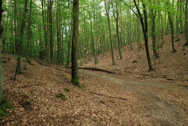 droga przez las, autor: rafal_gd