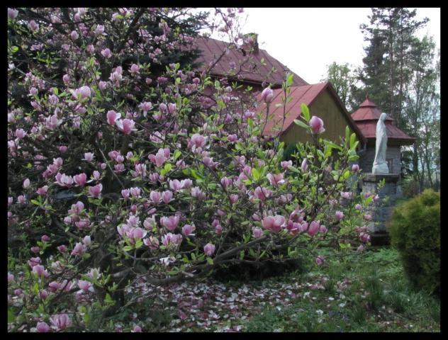 dwór w Wielogłowach i magnolia - MojRower.pl