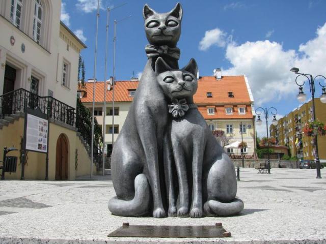 Koty na Trzebnickim Rynku - MojRower.pl