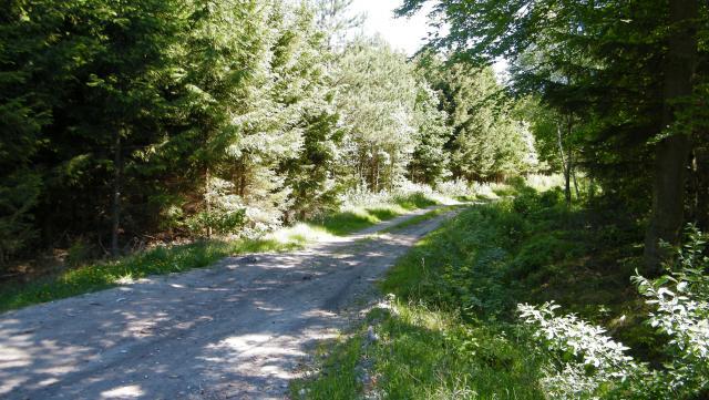 Droga do Poddąbia, autor: sylwas72