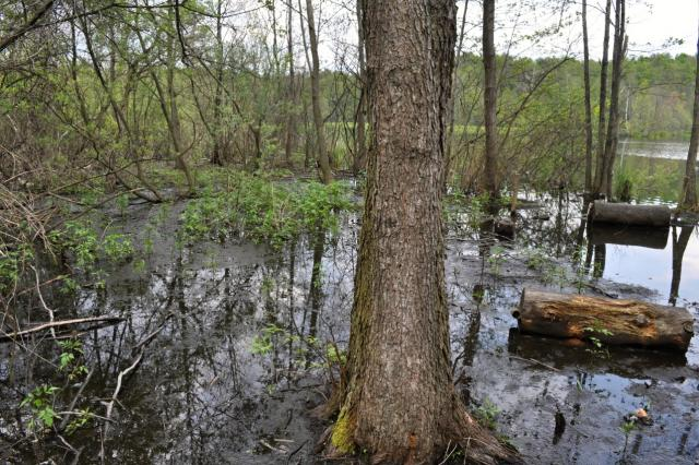 Rezerwat na Torfach - MojRower.pl