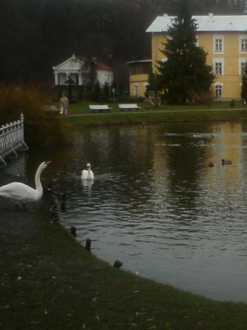 Park w Nałęczowie, autor: zdz20