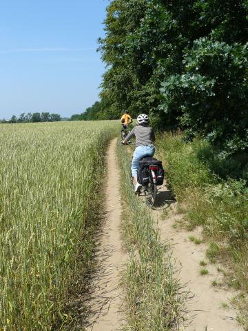 Przez łąki i pola - MojRower.pl