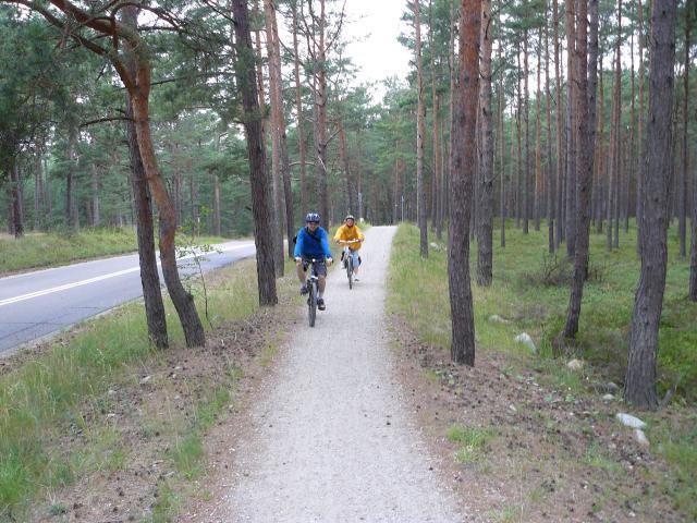 Droga rowerowa przez bór - MojRower.pl