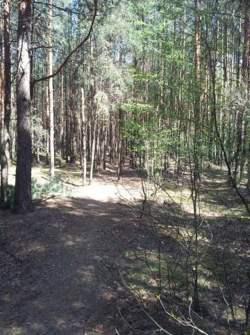 ..dalej lasem - MojRower.pl