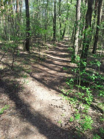 Pędząc lasem..., autor: lukaway